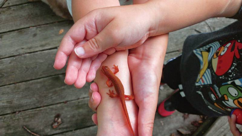 hunting-for-newts_8542_2019-06-10_15-59